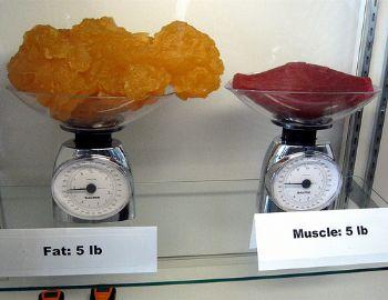 musclevfat